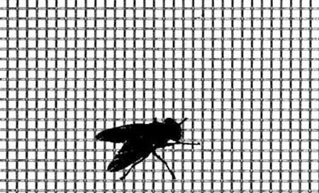 flyscreen